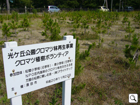 400 black pine seedlings donated to Sakata City