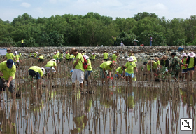 Tree-planting in a mangrove forest